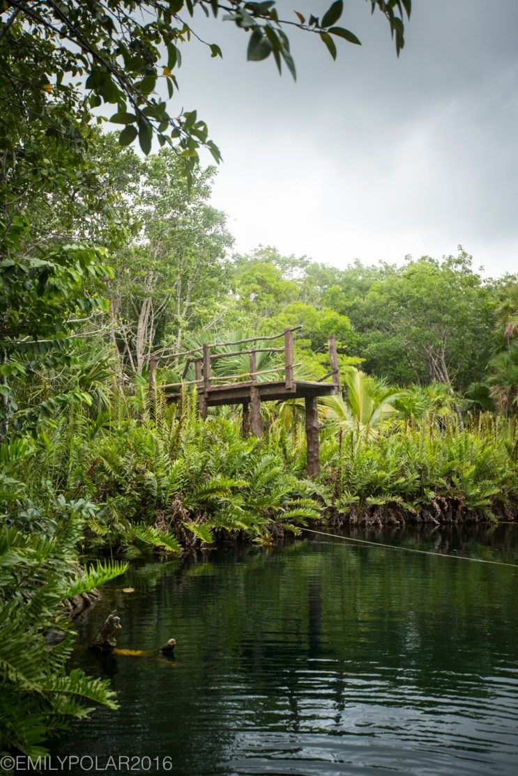 Wooden diving platform in the lush jungle forest at Crystal Cenote in Tulum, Mexico.