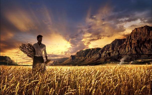 Tempo de colheita
