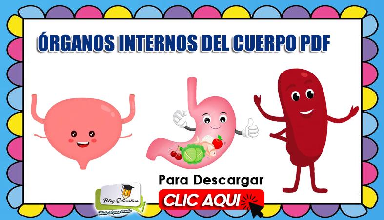 Órganos Internos del Cuerpo PDF - Blog Educativo