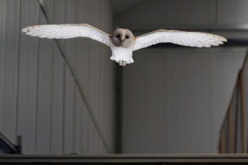 Comment les oiseaux volent dans des rafales de vent