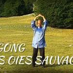 Histoire et particularités du Dayan Qi Gong