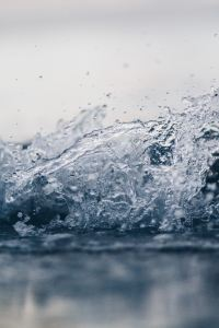 eau de sassy