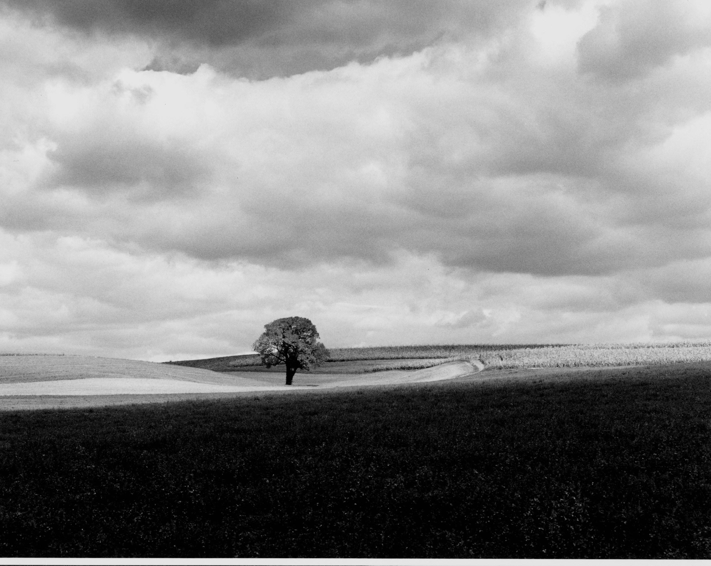 lone tree 2-1
