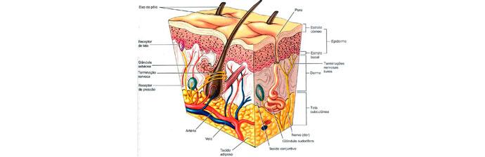 melasma-2 O Que é Melasma? Saiba Tudo sobre Esta Condição