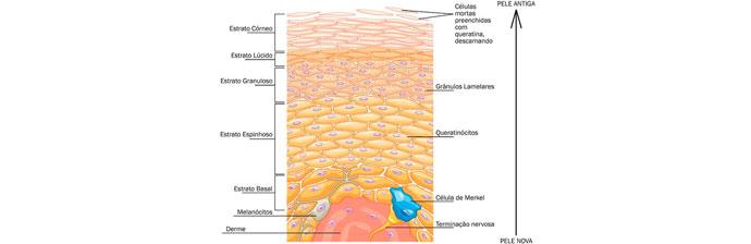 melasma-3 O Que é Melasma? Saiba Tudo sobre Esta Condição