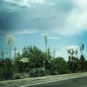Oracle, Arizona