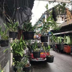 Krukväxter hängande från husväggar på en vanlig gata i Myanmar