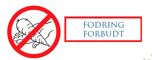 Fodring forbudt!
