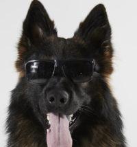 Rå hund
