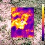 температура и трава