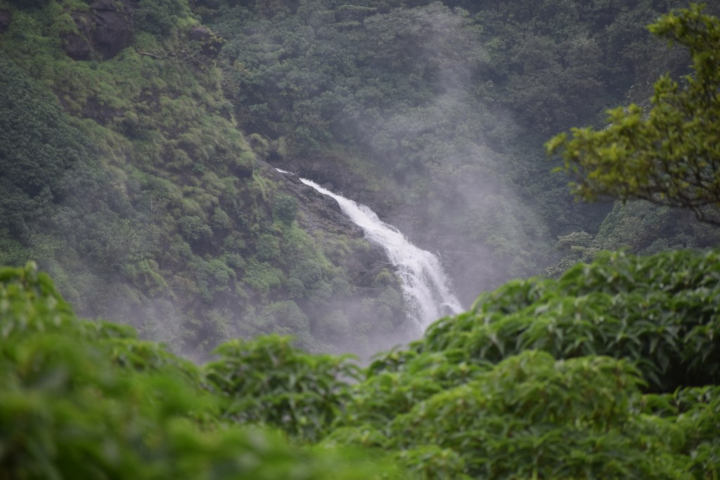 DSC 0507 Andharban Jungle trek Pune