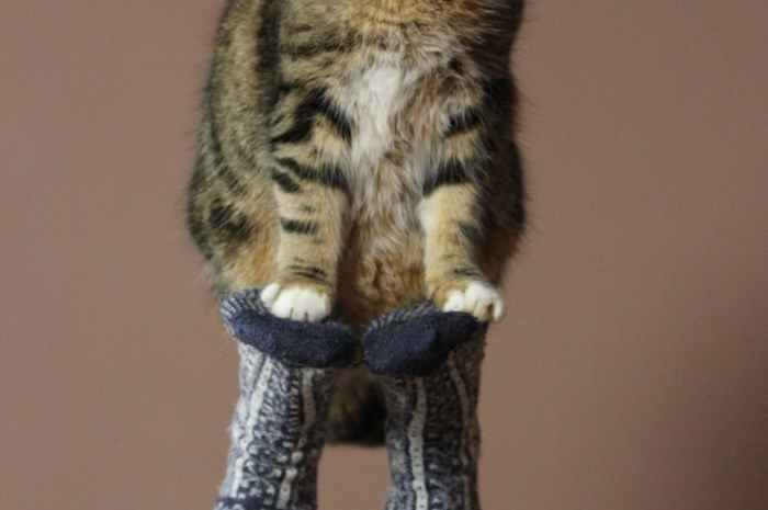 how to Train your Cat? 5 Easy ways to train cats.