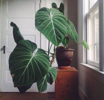 5 Indoor Plants You Probably Won't Kill