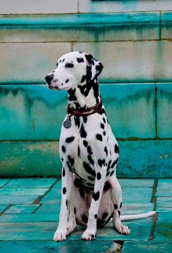 The Most Appropriate Dogs Breeds To Own In San Diego