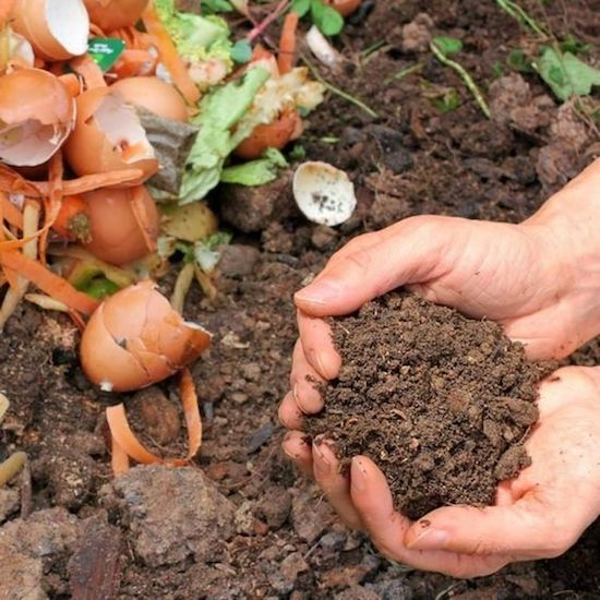 10 Composting Hacks You Need To Know