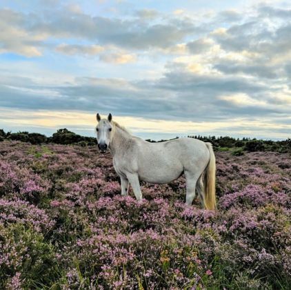 10 non touristy things to do in England