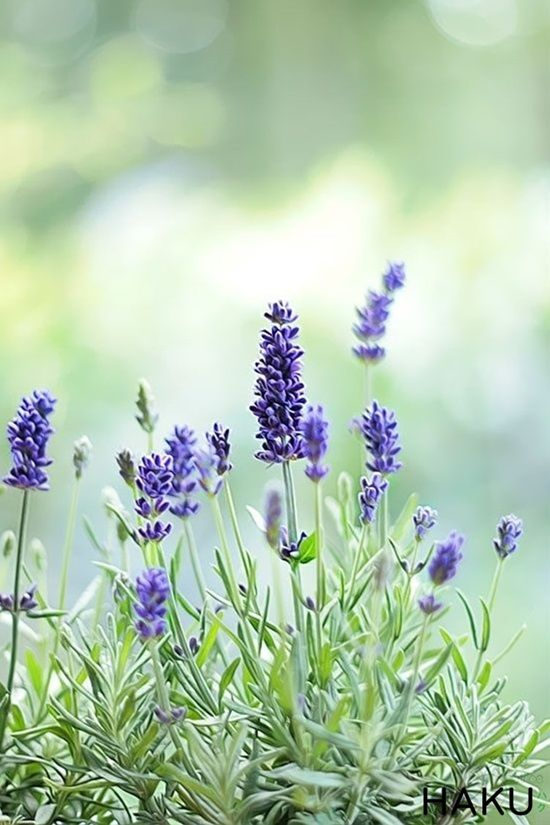 6 Plants To Keep Your Garden Mosquito Free