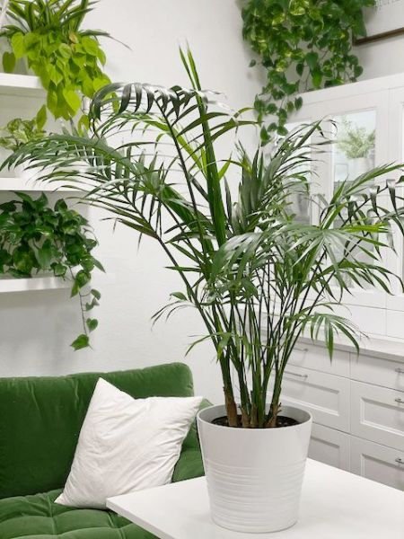 13 Indoor Plants Perfect For Your Home