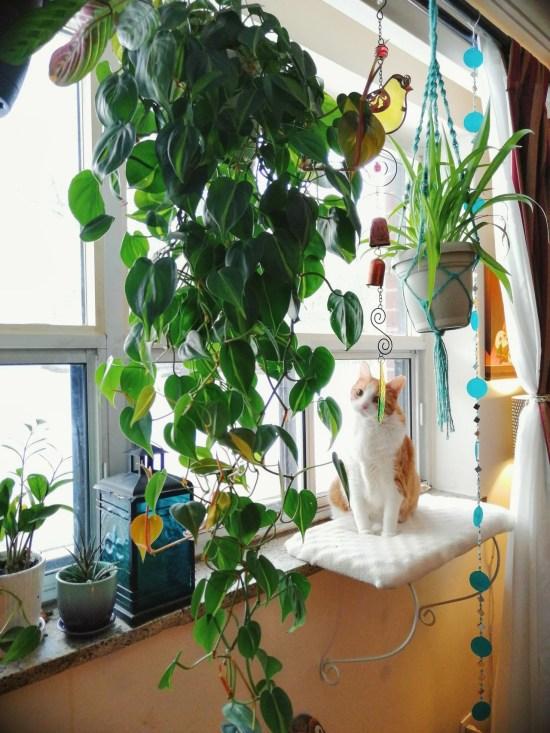 Low-Maintenance Houseplants For Your Dorm Room