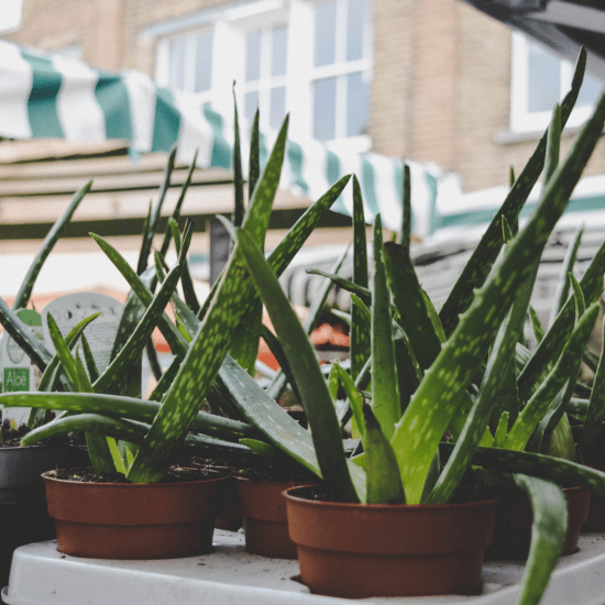 Easy Plants To Care For In A Dorm