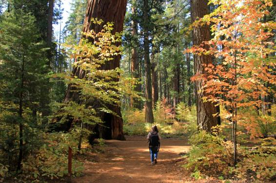10 Places To Visit In Northern California