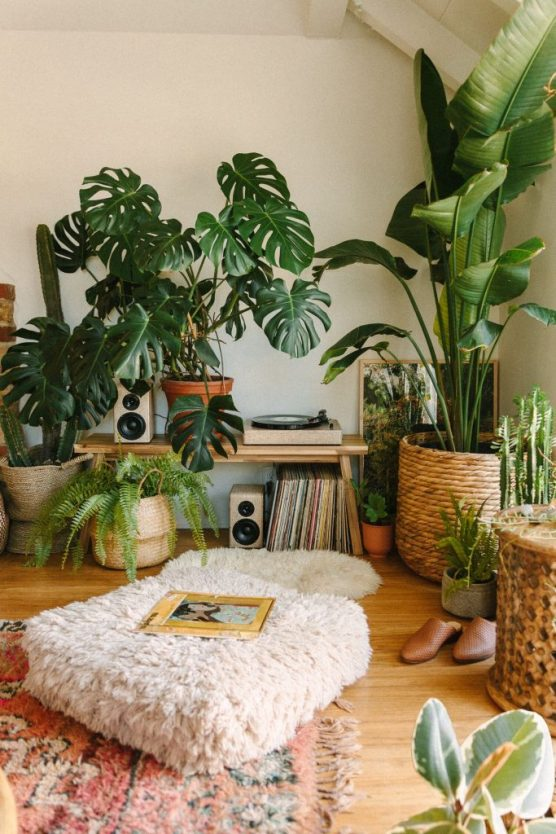 The Best Indoor Plants To Add Some Life To Your Living Space