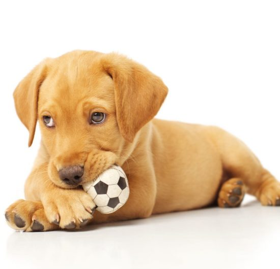 7 things to know before you get a puppy