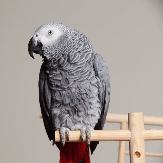 8 Unusual Pets That Will Become Your New Best Friends