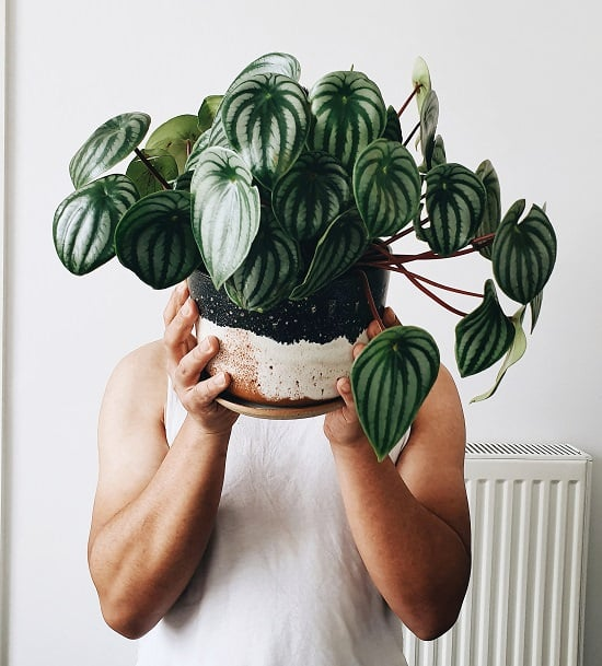 10 Plants You Can Easily Propagate Easily At Home
