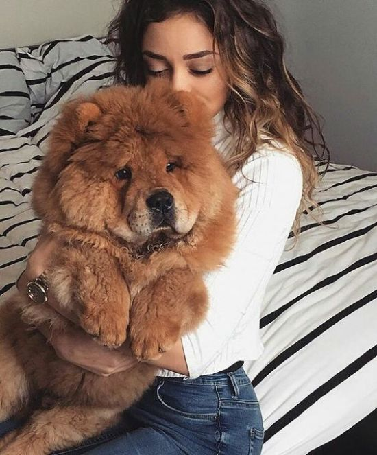 10 Reasons Your Dog Is Better Than A Boyfriend