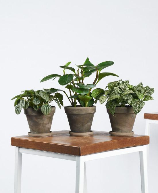 10 Online Shops For The Prettiest Plants