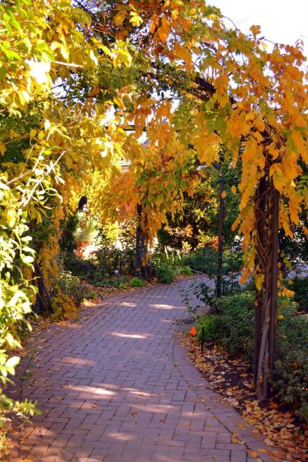 10 Must See Spots In Denver This Fall