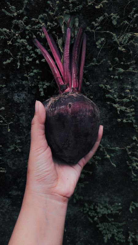 10 Easiest Vegetables to Grow From a Seed