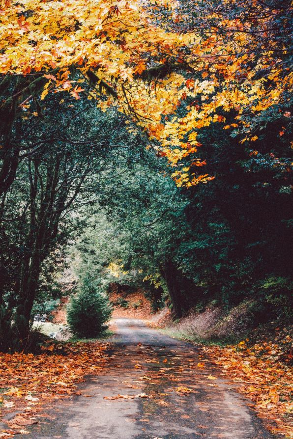 10 Autumn Facts You Wish You Knew