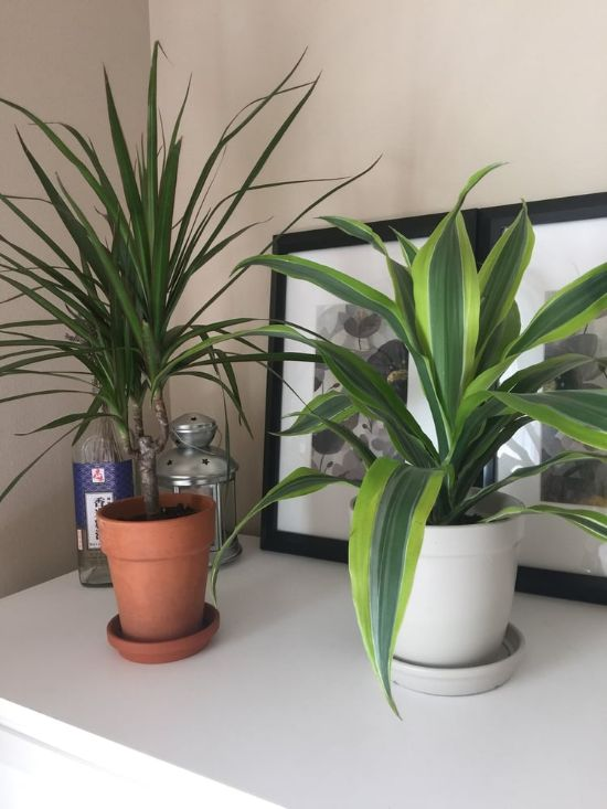 10 Of The Best Plants To Have In Your Apartment