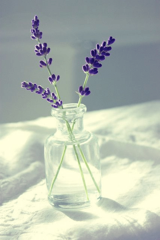 5 Ways To Implement Lavender Into Your Skincare Routine