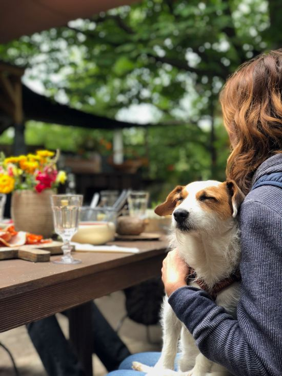 6 Reasons It's Better To Be A Dog Owner Than A Cat Owner