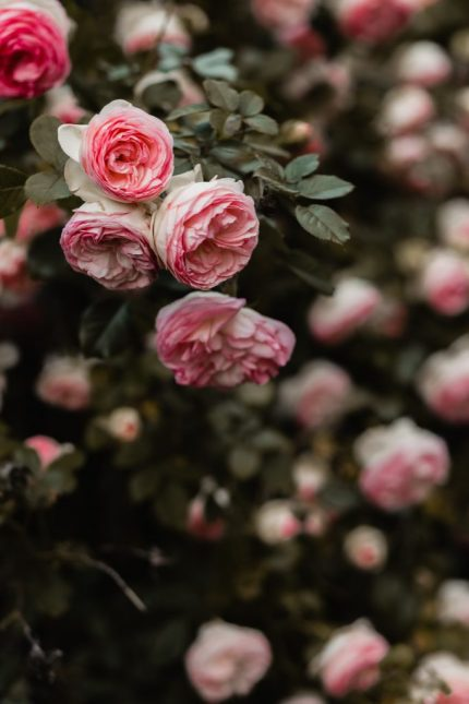 The Best Wedding Flowers You Can Have At Your Ceremony