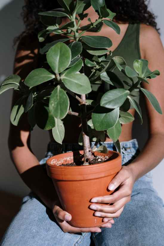 Best Tips For Keeping Your Plants Alive