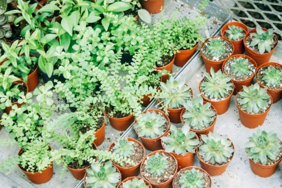 Summer Gardening: Tips On How To Create Your Own Garden Of Eden
