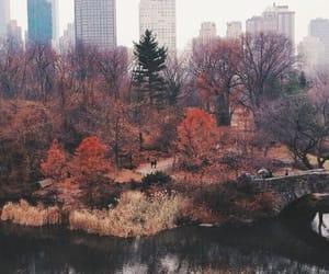 city, fall
