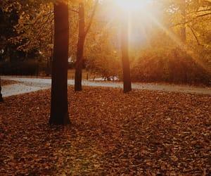 bright, fall