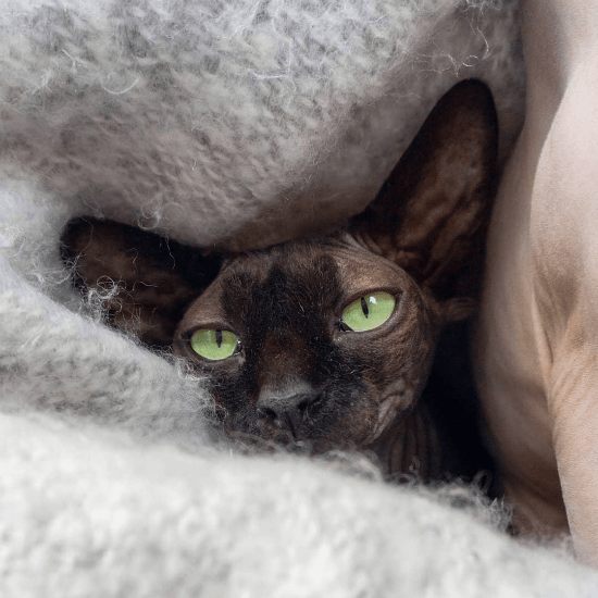 8 Things To Consider Before Getting A Pet