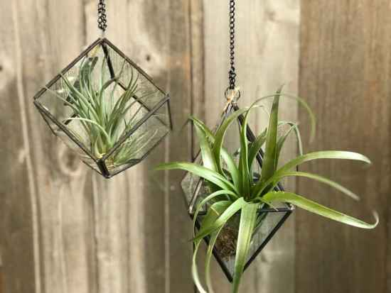 10 Stylish Succulents That Will Look Great In Your Home