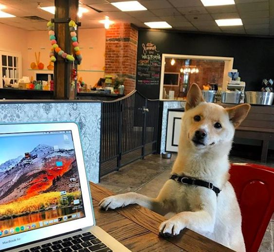 5 Must Visit Pet Cafes In New York City