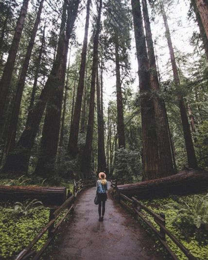 Muir Woods is top places to go when you need a break from the city life around UC Berkeley!