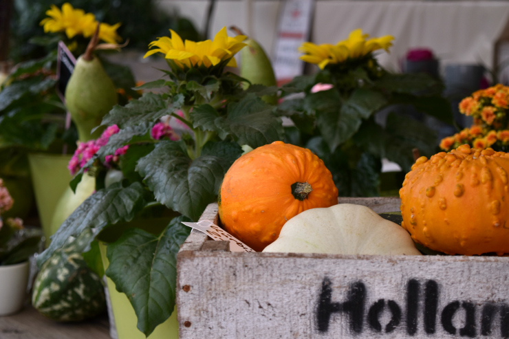 Pumpkins and squash in wooden crate at farmers' market in Munich