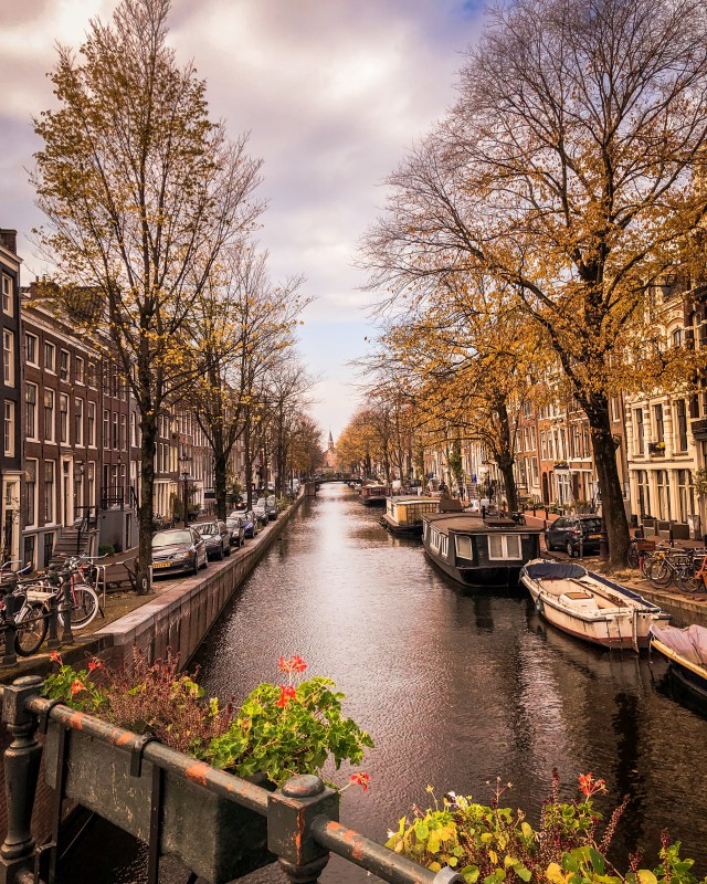 river and trees in amsterdam