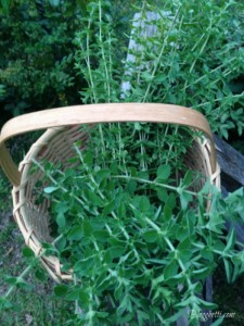 basket of herbs1