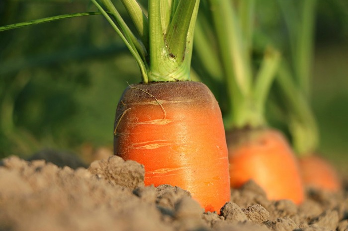 3 Grow your own veggies